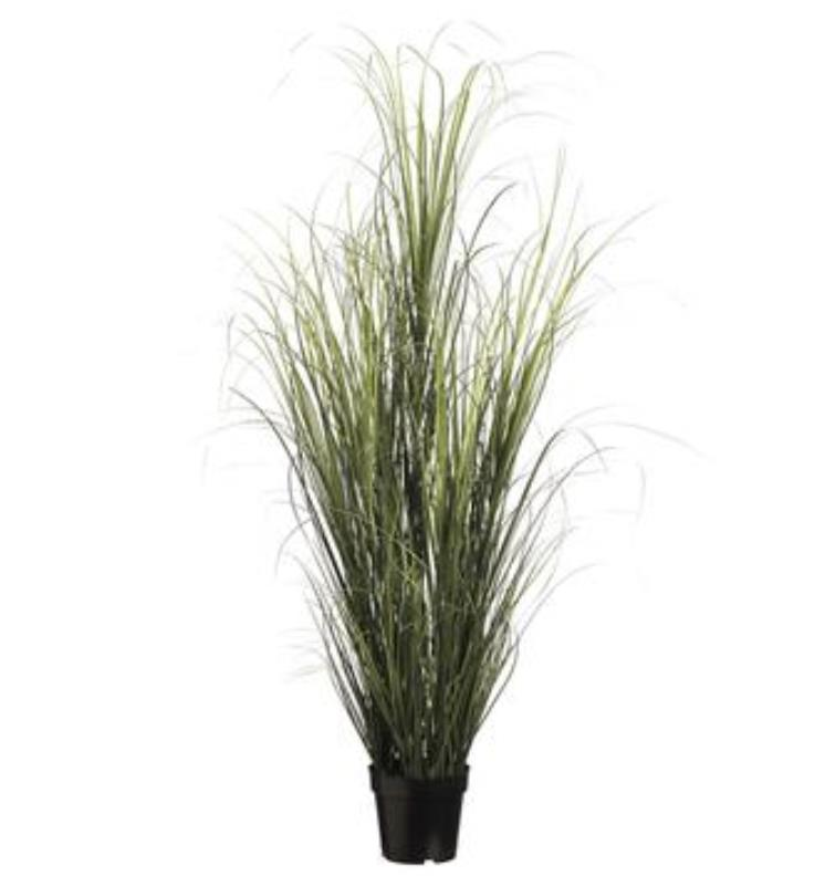 Grass Bush in Pot