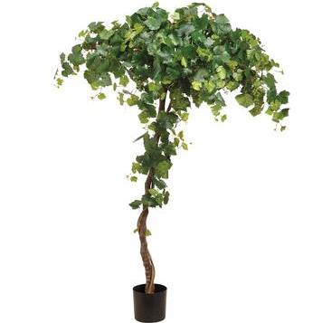 Grape Tree - Potted