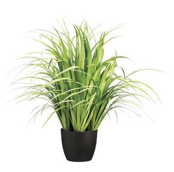 Reed Grass - Potted