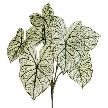 Caladium Leaf Bush