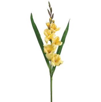 Gladiolus Spray - Yellow