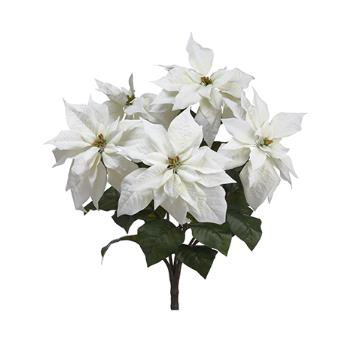 Poinsettia Bush - White