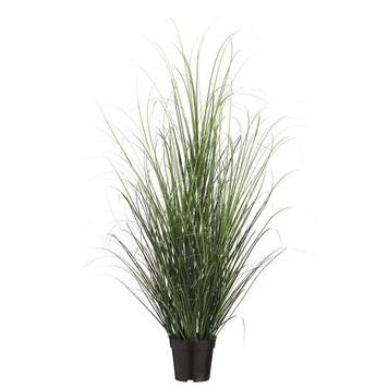 Grass Bush - Potted