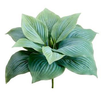 Hosta Leaf Bush