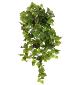 Grape Ivy Hanging Bush