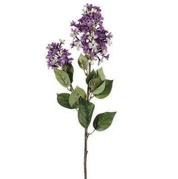 English Lilac - Lavender